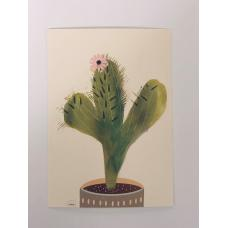 Kaktus kort